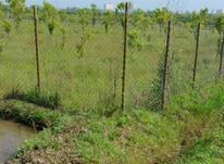 فروش زمین 5000 متر در تنکابن در شیپور-عکس کوچک