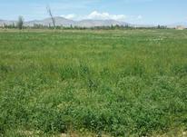 زمین 1,400 متری یونجه روستا کل تپه در شیپور-عکس کوچک