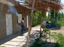 فروش باغ میوه 8000 متری در شکرک ابهر در شیپور-عکس کوچک