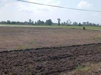 فروش زمین مسکونی 5000 متر در چاف و چمخاله در شیپور