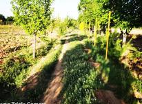 فروش 5جریب باغ انگور در باغات کهریز در شیپور-عکس کوچک
