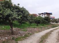 فروش زمین مسکونی 400 متر در نوشهر در شیپور-عکس کوچک