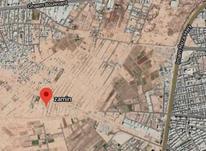 8قصب زمین در اراضی شرف اباد کرمان منطقه در حال رشد در شیپور-عکس کوچک