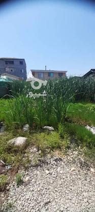 زمین داخل بافت مسکونی 233 متر در چالوس در گروه خرید و فروش املاک در مازندران در شیپور-عکس3