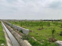 فروش زمین کشاورزی 300 متر در قائم شهر در شیپور-عکس کوچک