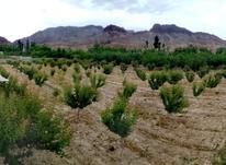 باغ روستای اهوانو در شیپور-عکس کوچک