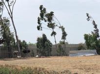 فروش ویژه ی باغ دو هکتاری در بهنمیر در شیپور-عکس کوچک