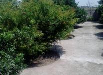 فروش زمین مسکونی 600 متر در امامزاده عبدالله در شیپور-عکس کوچک