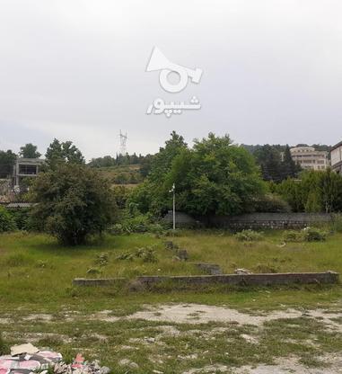 فروش زمین مسکونی 416 متر در نوشهر در گروه خرید و فروش املاک در مازندران در شیپور-عکس4