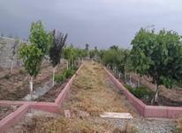 450 متر باغچه با چاه آب و برق ، گاز بهترین نقطه ماهدشت در شیپور-عکس کوچک