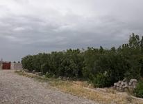 2 قطعه باغ و باغچه 400 متری کنار هم با چاه آب در ماهدشت در شیپور-عکس کوچک