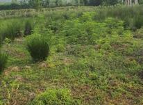 زمین مسکونی با ویو مناسب در شیپور-عکس کوچک