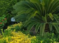 خدمات باغبانی در شیپور-عکس کوچک