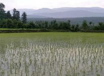 زمین کشاورزی جنگلی  2150متری درامل  در شیپور-عکس کوچک