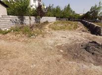 زمین مسکونی 300 متر در تنکابن در شیپور-عکس کوچک