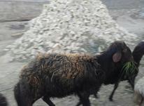 غزل افشار هیکلی در شیپور-عکس کوچک