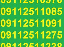 0911.251.0.970 در شیپور-عکس کوچک