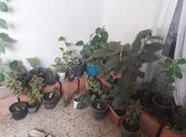 فروش انواع گل آپارتمانی و باغچه ای در شیپور-عکس کوچک