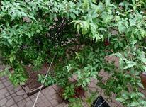 58متر هاشمی تک واحدی حیاط دار در شیپور-عکس کوچک