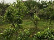 فروش زمین مسکونی 350 متر در فریدونکنار در شیپور-عکس کوچک