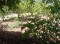 فروش باغ 225 متر خوش قواره جابان دماوند در شیپور-عکس کوچک