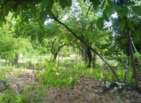 باغ انگور جاده دانشگاه در شیپور-عکس کوچک