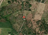فروش زمین کشاورزی 10000 متر در بابل در شیپور-عکس کوچک