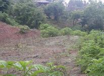 فروش زمین 2000 متر در رودبارسرا پونل در شیپور-عکس کوچک