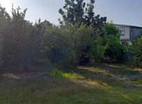 فروش زمین مسکونی 700 متر در بابل در شیپور-عکس کوچک