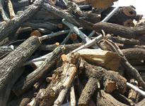 خرید انواع چوب یا کنده درختانی مثل زردآلو گردو بادام توت در شیپور-عکس کوچک