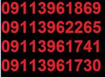 0911.396.17.46 در شیپور-عکس کوچک