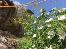 اجاره روزانه باغ ویلا در شیپور