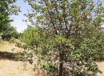 فروش 2جریب باغ در کهریز به قیمت در شیپور-عکس کوچک