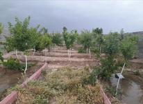 فروش زمین و باغچه 110 متر سند تک برگ رسمی در شیپور-عکس کوچک