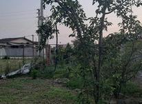 فروش زمین مسکونی 580 متر در شیپور-عکس کوچک