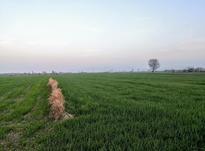 2500 متر زمین جاده قدیم گرگان کردکوی در شیپور-عکس کوچک