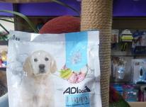 غذا خشک سگ در شیپور-عکس کوچک
