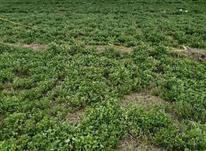 زمین کشاورزی 60000 متر در ارومیه در شیپور-عکس کوچک