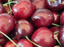 جهت کار در میوه فروشی در شیپور-عکس کوچک