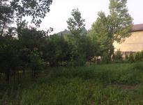 فروش زمین 402 متر در لاهیجان در شیپور-عکس کوچک