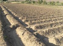 زمین کشاورزی با آب در شیپور-عکس کوچک