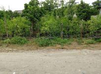 زمین مسکونی 1000 متر در نعمت اباد  در شیپور-عکس کوچک