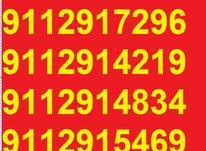 0911.291.75.60 در شیپور-عکس کوچک