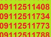0911.251.14.08 در شیپور-عکس کوچک
