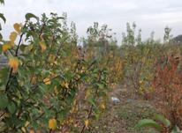 فروش باغچه 500 متر در شهریار در شیپور-عکس کوچک