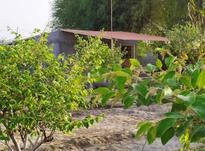 فروش فوری   زمین  در شیپور-عکس کوچک