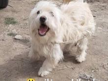 سگ گمشده یا... در شیپور