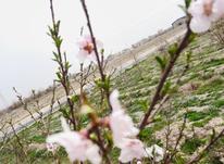 باغچه زمین باغی 400 متری شهریار رباط در شیپور-عکس کوچک