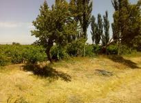 باغ انگور نیم هکتار در شیپور-عکس کوچک