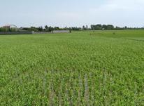 فروش زمین مسکونی 7000 متر در فریدونکنار در شیپور-عکس کوچک